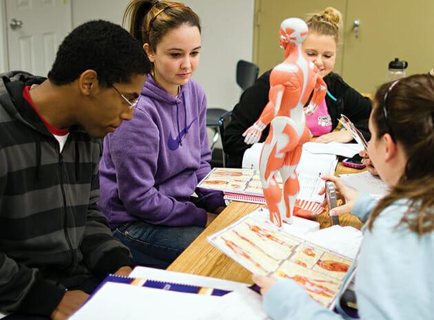 Students looking at human model
